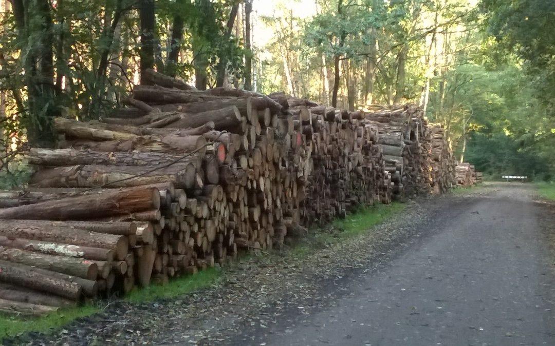 Taskforce duurzaamheid geeft antwoorden over biomassa