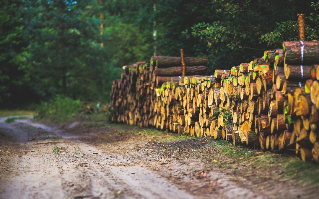 Informatie over inzet biomassa belangrijk, zo blijkt uit webinar Gelderse gemeenten