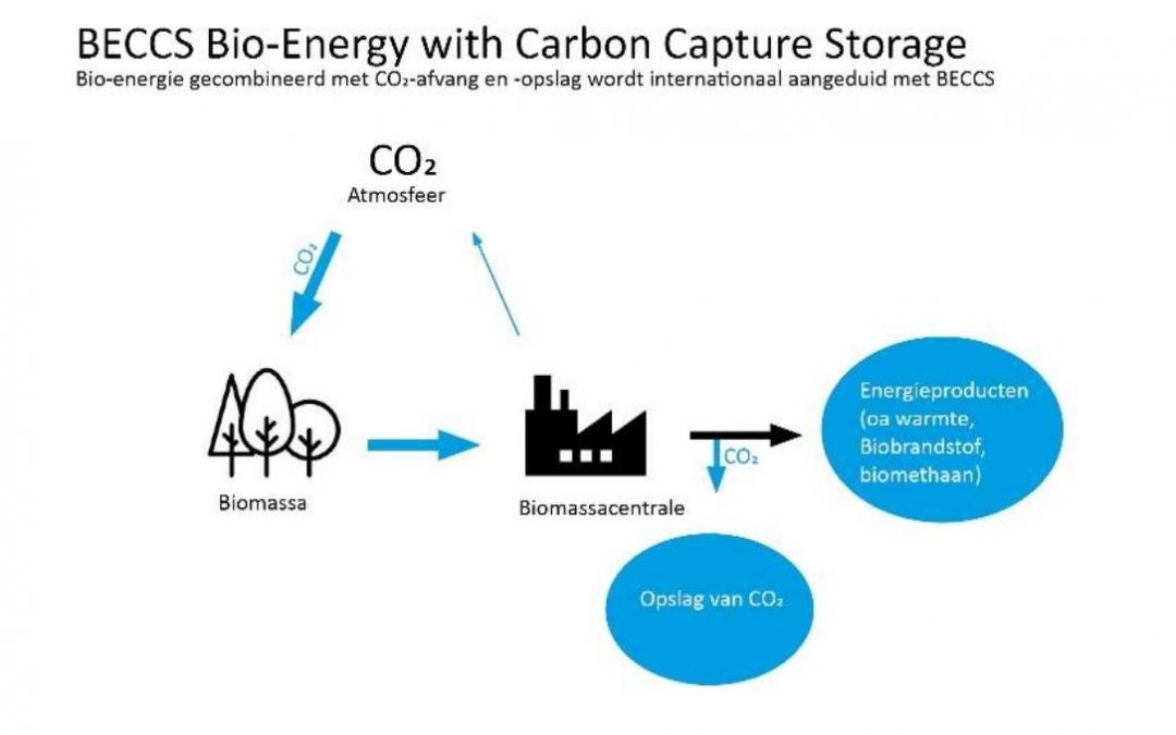Position paper biomassa en bio-energie